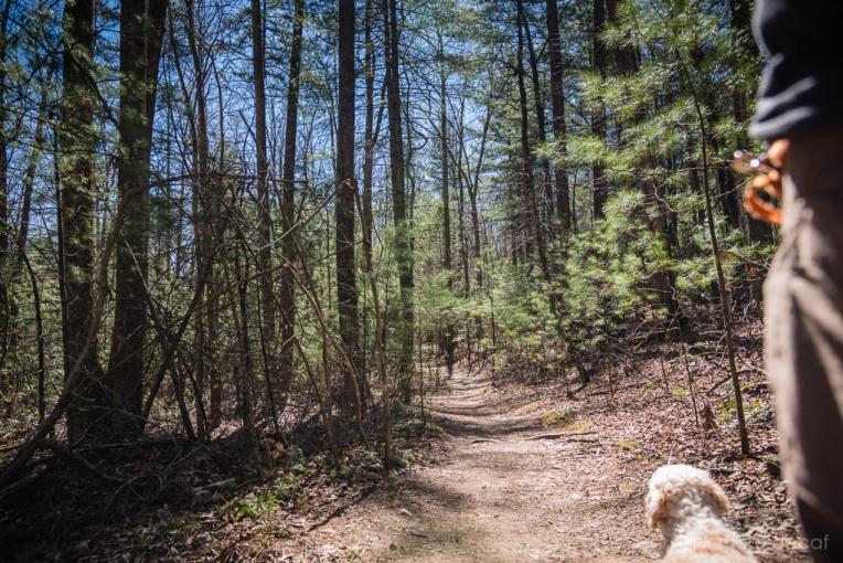 April 2015 Bent Creek Experimental Forest