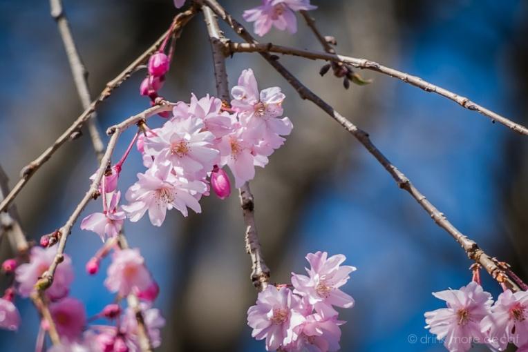 April 4 2015 Spring 1