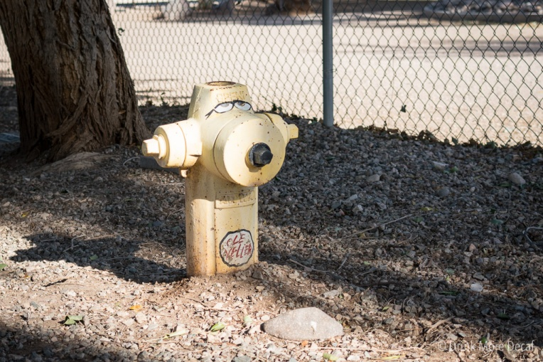 Lions Dog Park in Lake Havasu City, Arizona