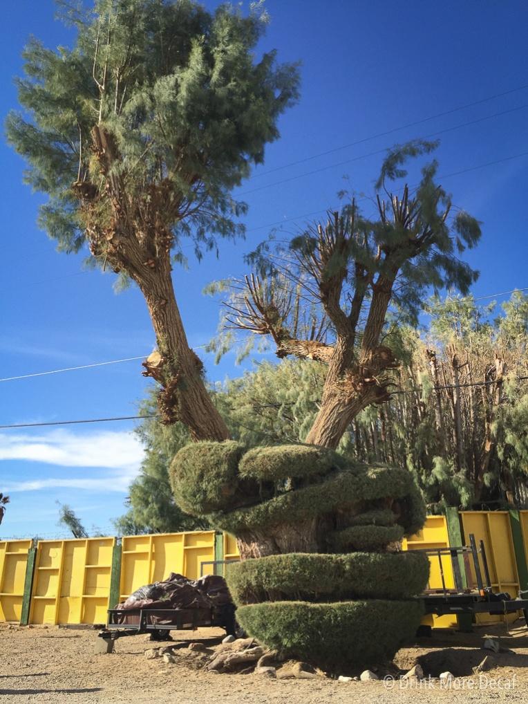 Crazy Tree