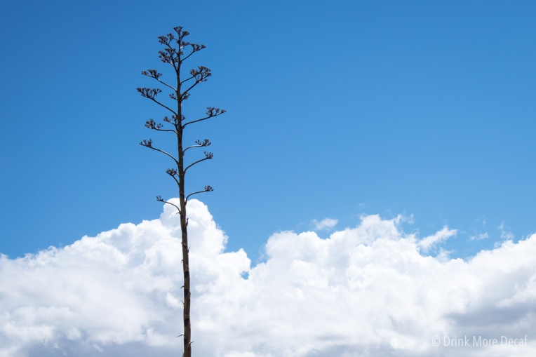 3 Arizona Tree